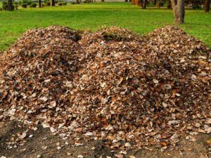 Backyard brush pile of leaves, perfect winter hiding place for small critters.