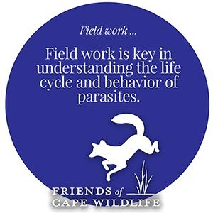 Graphic, field work Field work is the key to understanding the life cycle and behavior of parasites.