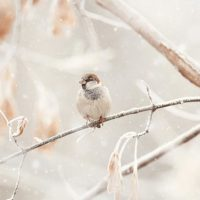 Winter bird on branch in snow