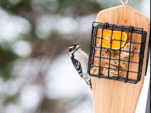 Bird Feeder in winter